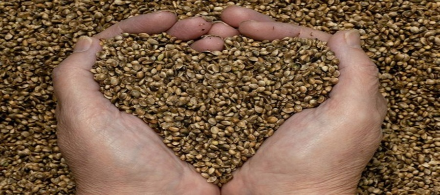 Hands Heart Love Hemp Seeds