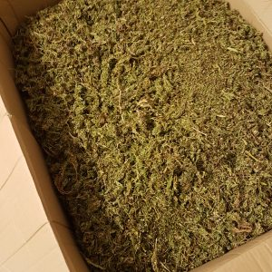 Wholesale Hemp Buds