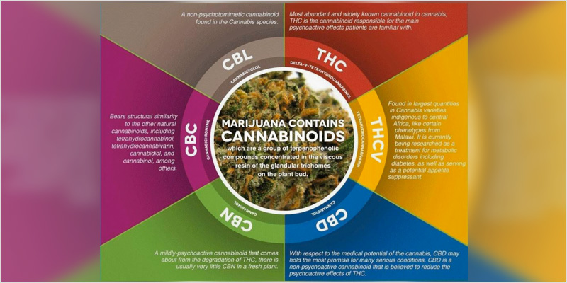 Cannnabinoids and the Entourage effect