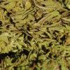 Carmagnola high grade hemp buds gallery 2
